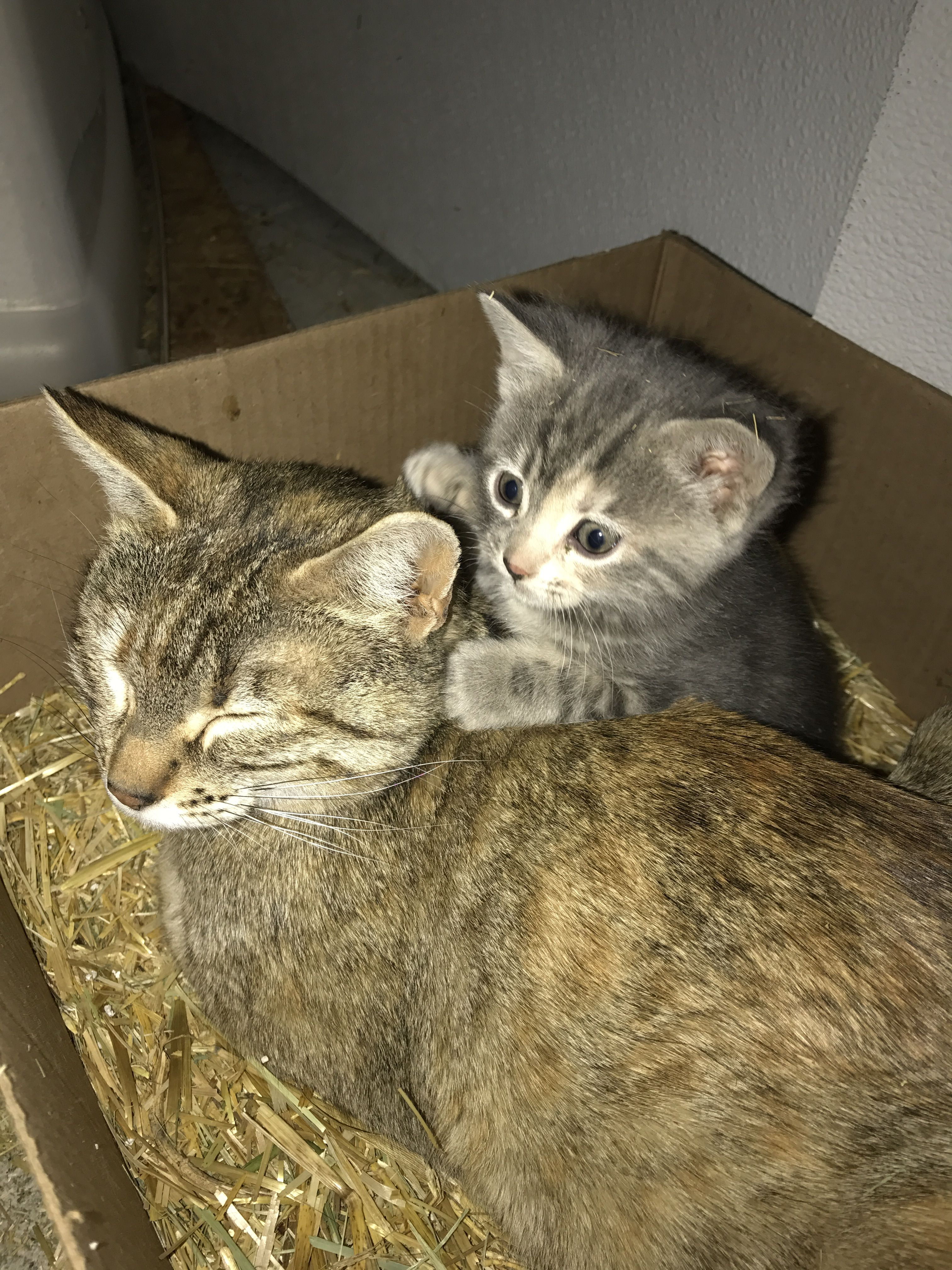 Our Kitten Marteeka With Her Mom Girlfriend Marteeka Our Kitten First Shes Sour Then She S Sweet Kittens Cats Kittens Cats