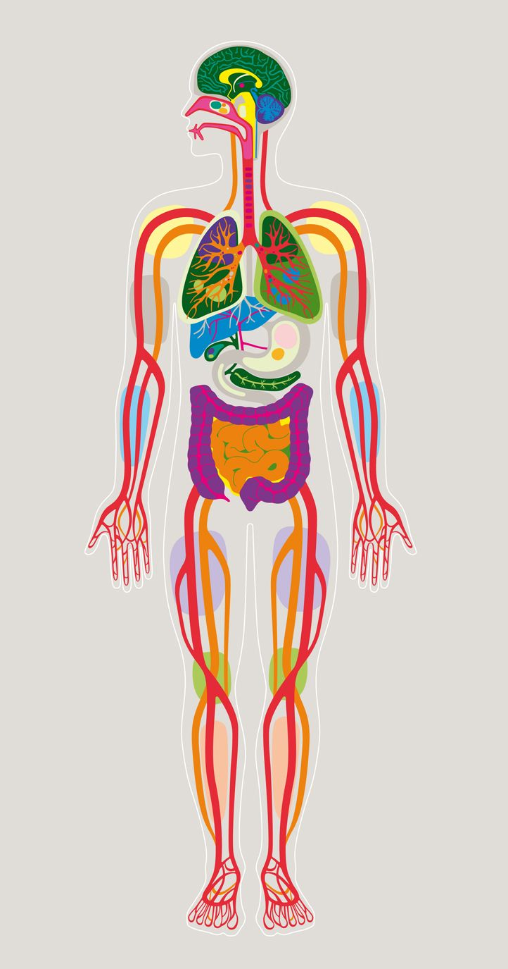 Human Body, illustration | Stockholm Design Lab