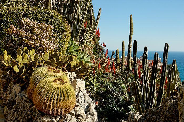The Very Best Of Monaco Jardin Exotique Monaco Jardin Exotique