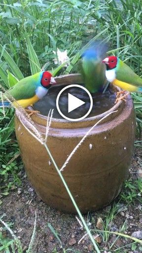 The parrot to drink water #parrot #bird #pet
