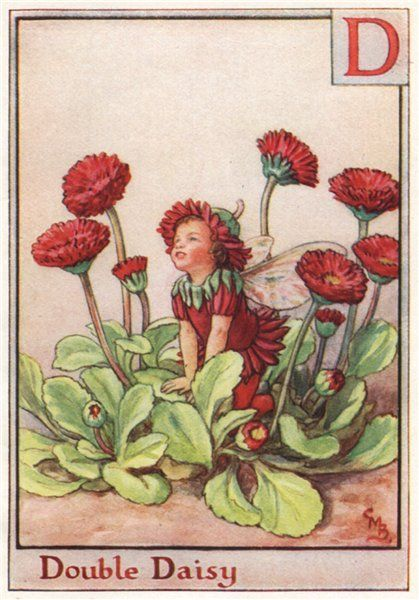 FLOWER FAIRIES/BOTANICALS: Double Daisy; This is an original vintage Cicely Mary Barker Flower fairies colour print. It is not a modern reproduction, c1934; approximate size 11.0 x 7.5cm, 4.25 x 3 inches