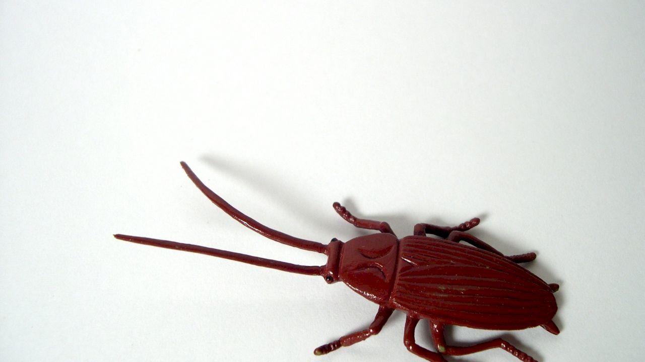 تفسير حلم الصراصير Bee Insects Cockroaches
