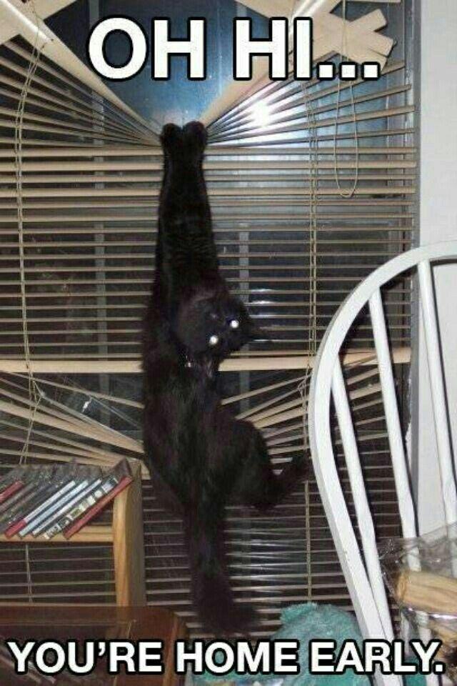 Heeeyyy! | funny stuff | Pinterest | Funny cats, Funny cat ...