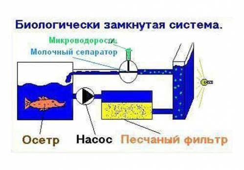 Узв для выращивания рыбы схема оборудования своими 358