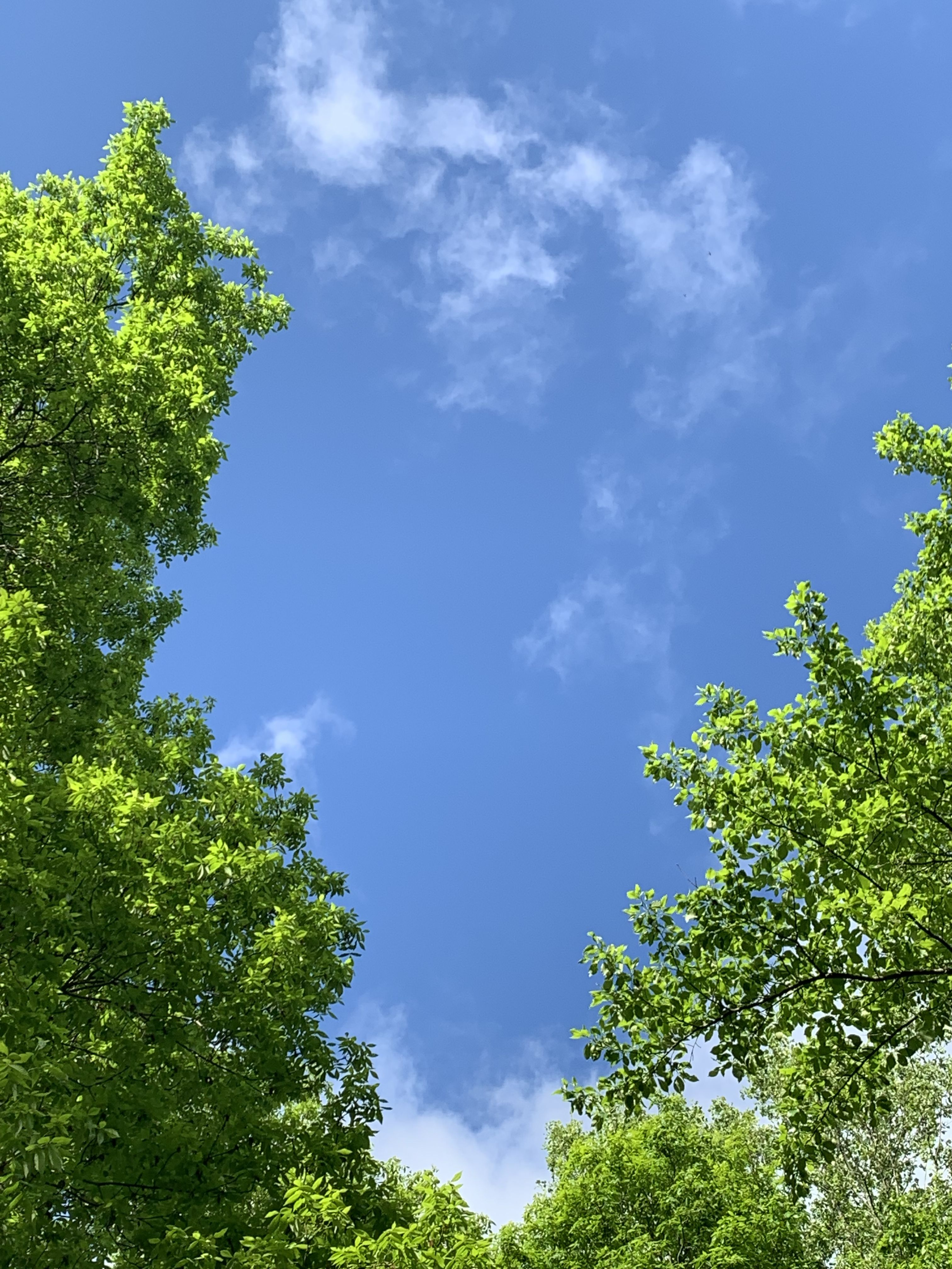 Beautiful Greenery And Blue Sky Today Nature Naturephotography Naturelovers Nature Photography Nature Outdoor