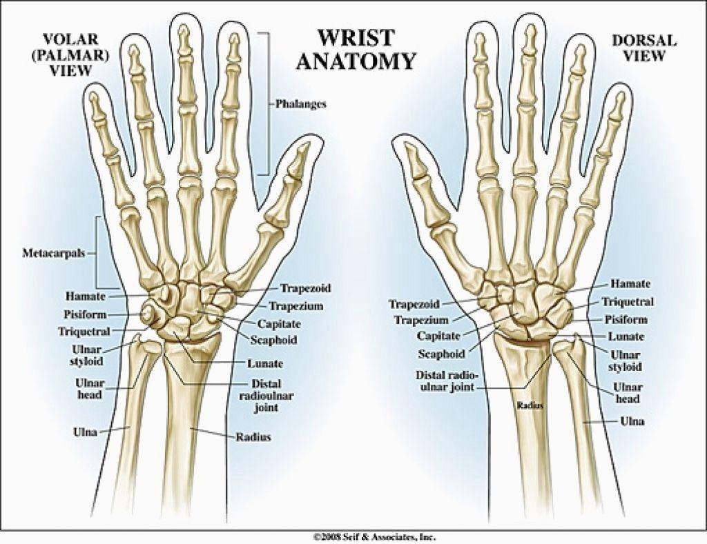 Human Hand Anatomy Human Body Anatomy Pinterest Wrist Anatomy