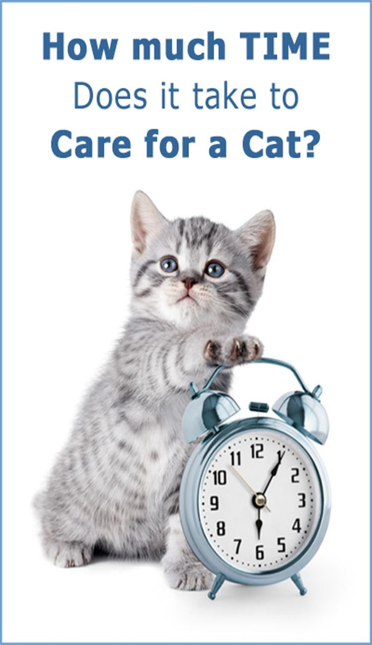 How Much Time Does It Take To Care For A Cat Cat care