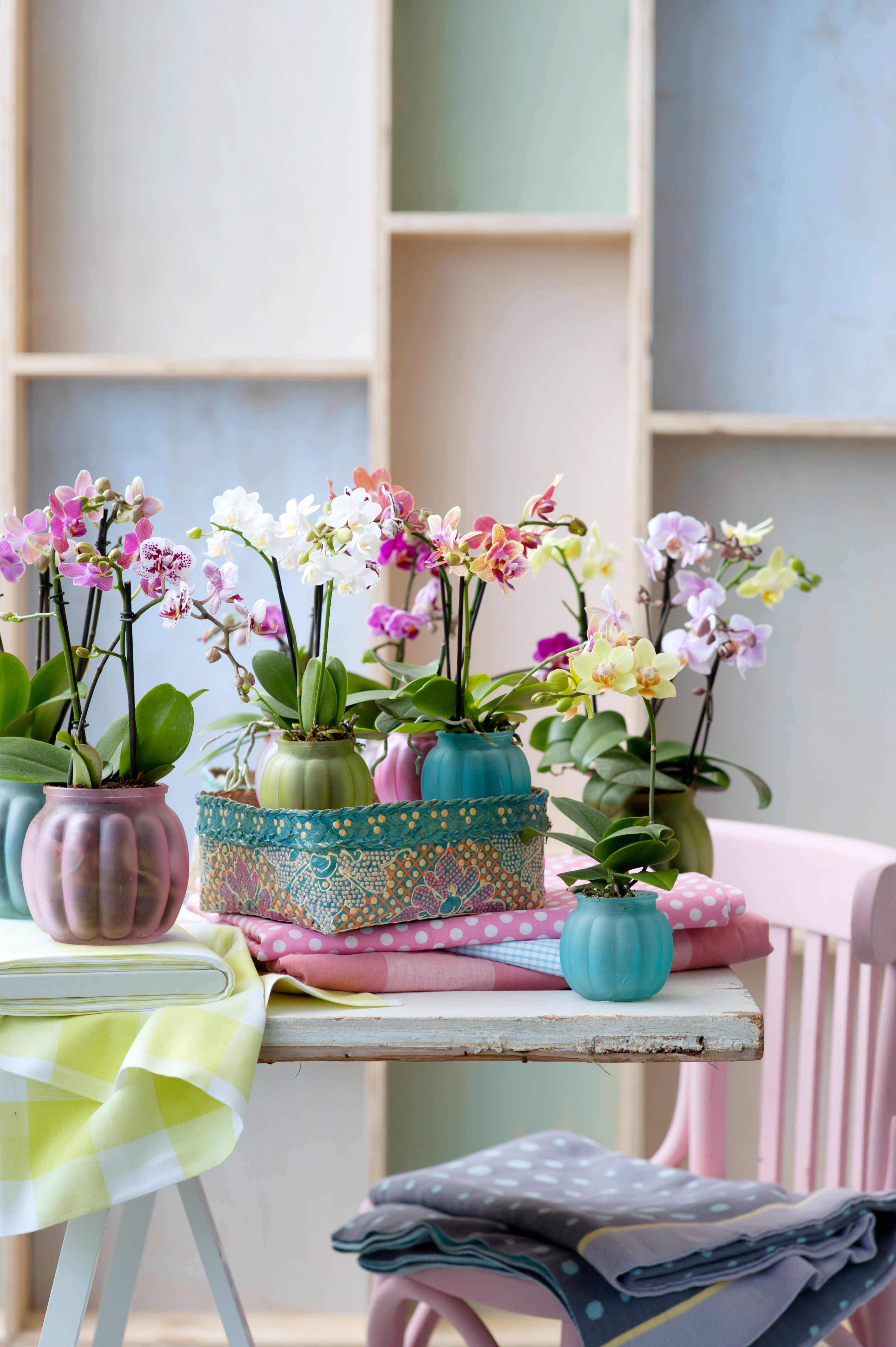 Orchid Orchidee Bunt Living Inspiration Wohnideen Phalaenopsis Pflanzenfreude