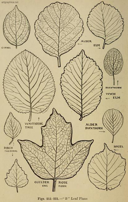 Forms And Textures Of Young Tree Leaves Flower Drawing Tutorials Floral Drawing Leaf Drawing