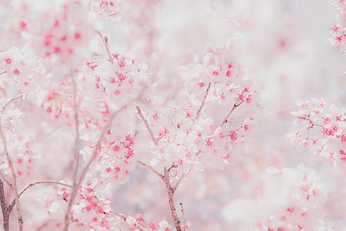 Flowers Pink And Nature Image Tumblr Flower Pretty Flowers Spring Blooms