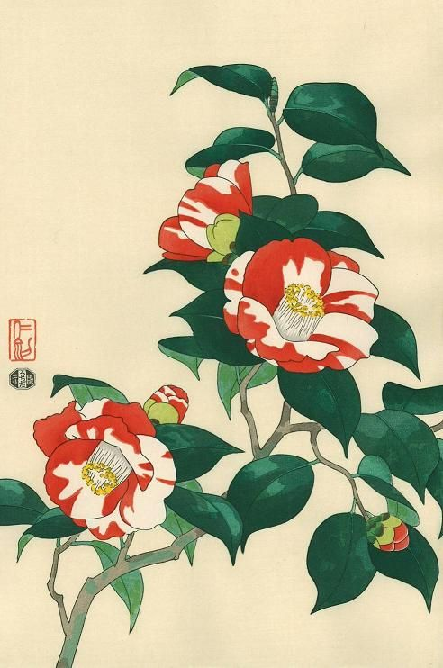 Tsubaki Japanese Woodblock Printing Japanese Painting Botanical Art