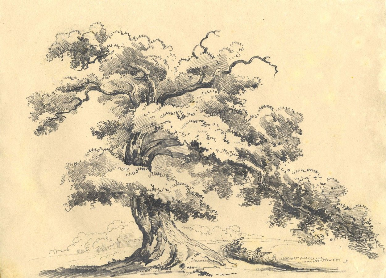 tree drawings google search