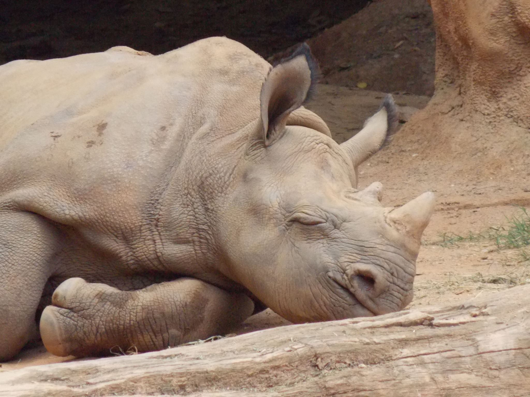 #ZAFanFriday pic of the week is from Facebook user Gail L. who captured this cute photo of Jabari. What do you think he's dreaming about?