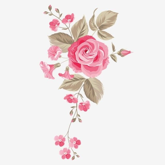 Garden Rose Flower Centifolia Roses Floral Design Watercolor Painting Flower Amp Png Transparent Clipart Image And Psd File For Free Download In 2020 Hd Flowers Floral Amazing Flowers