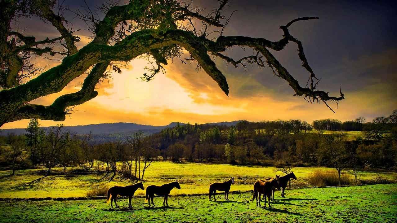 Nature Photos Hd Nature Wallpaper