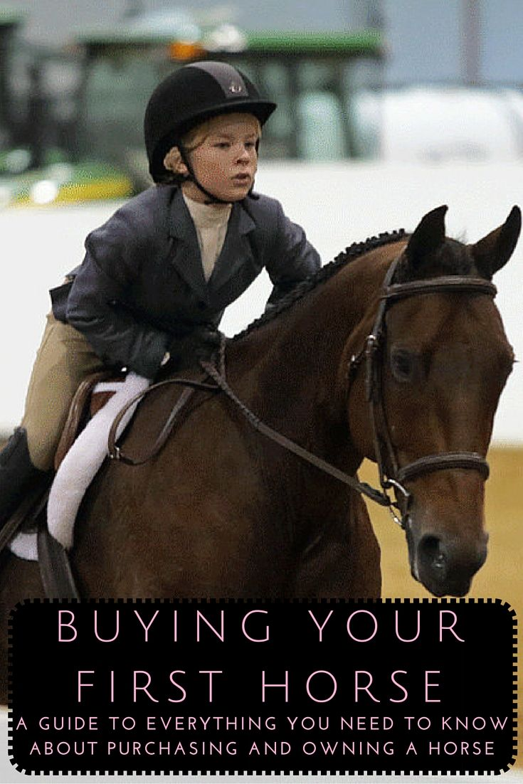 Buying A Horse Property What You Need To Know