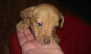 Oklahoma City Pets Craigslist City Pets Pets Pets Online