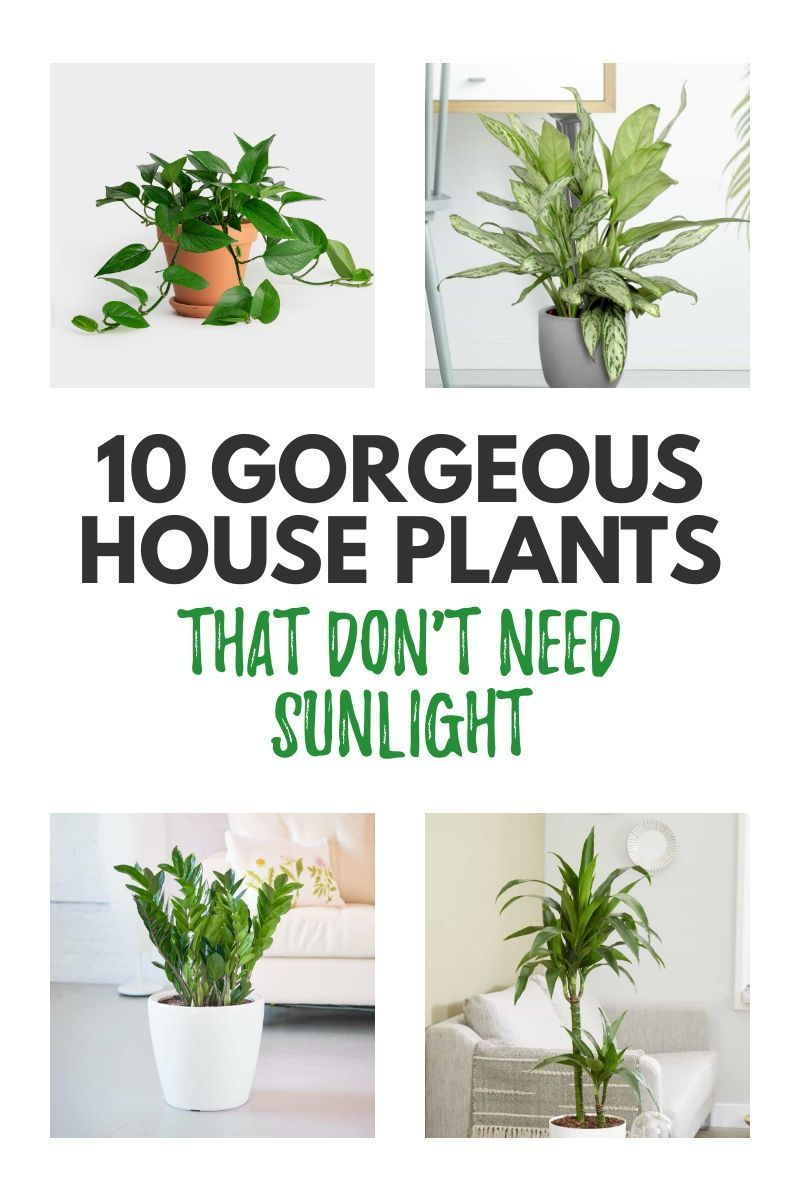 10 Of The Best Indoor Plants That Don T Need Sunlight Typically Topical In 2020 Big Indoor Plants Indoor Plants Low Light Best Indoor Plants