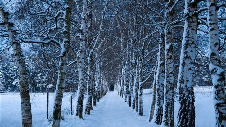 Free Macbook Air Wallpapers Download Winter Wallpaper Winter Wallpaper Desktop Free Winter Wallpaper