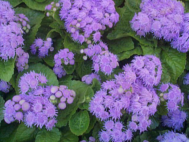 Pin By Saving Shepherd On Garden Goodies Plants Balcony Plants Pretty Plants