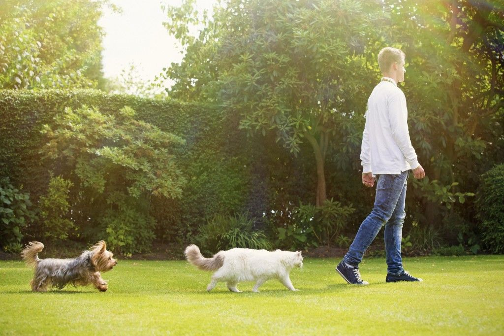 Tips to help relieve hayfever in dogs.