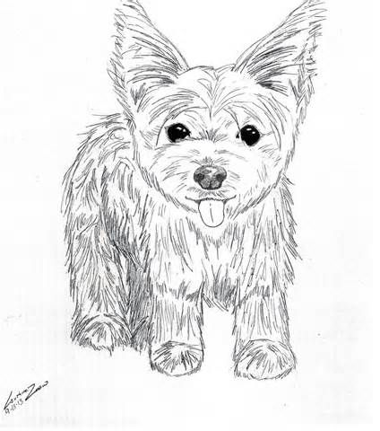 Yorkie Puppy Coloring Pages To Print Coloring Pages Puppy