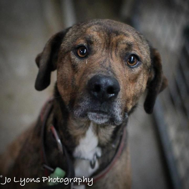 Meet Tigger Tigger Is A Large Brindle Cross Breed Hes About 2