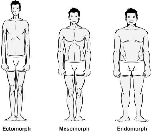 Workouts & Diet Plans for Ectomorph, Mesomorph and ...