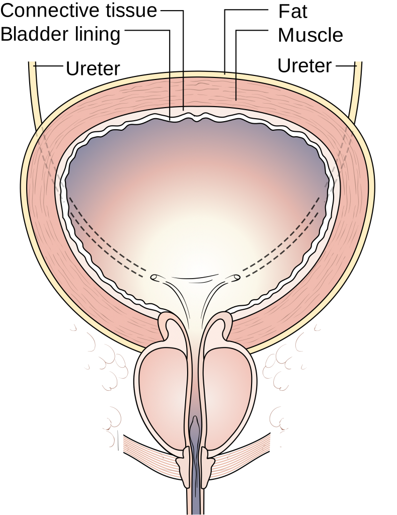 Pin on Pelvic Floor Physical Therapy