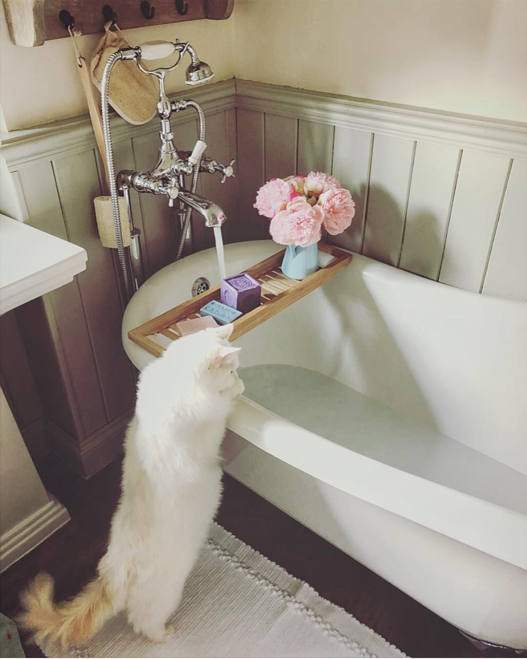 One Of These Days I Ll Have To Fish Him From The Tub I M Not