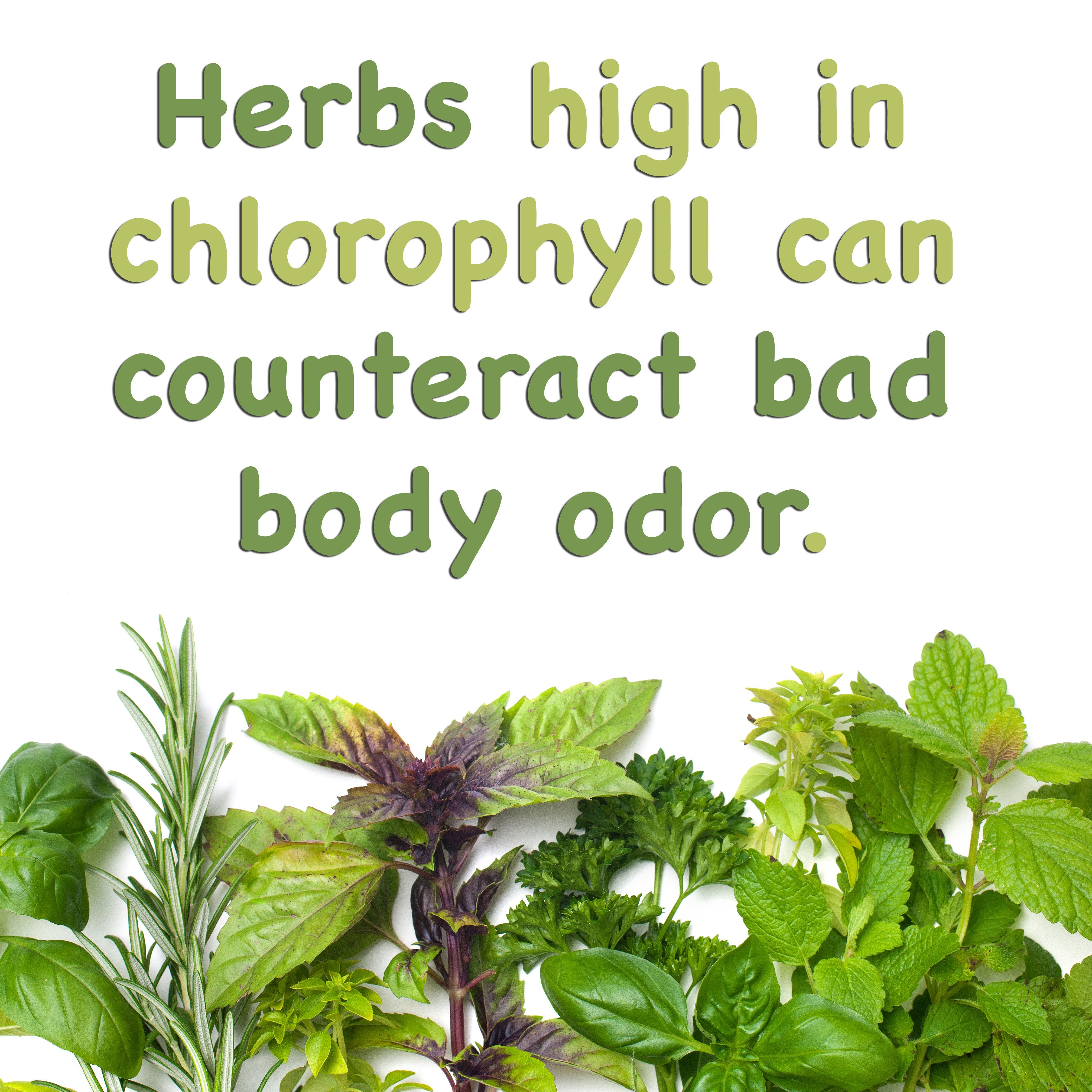 Herbs high in chlorophyll, such as parsley, cilantro, and