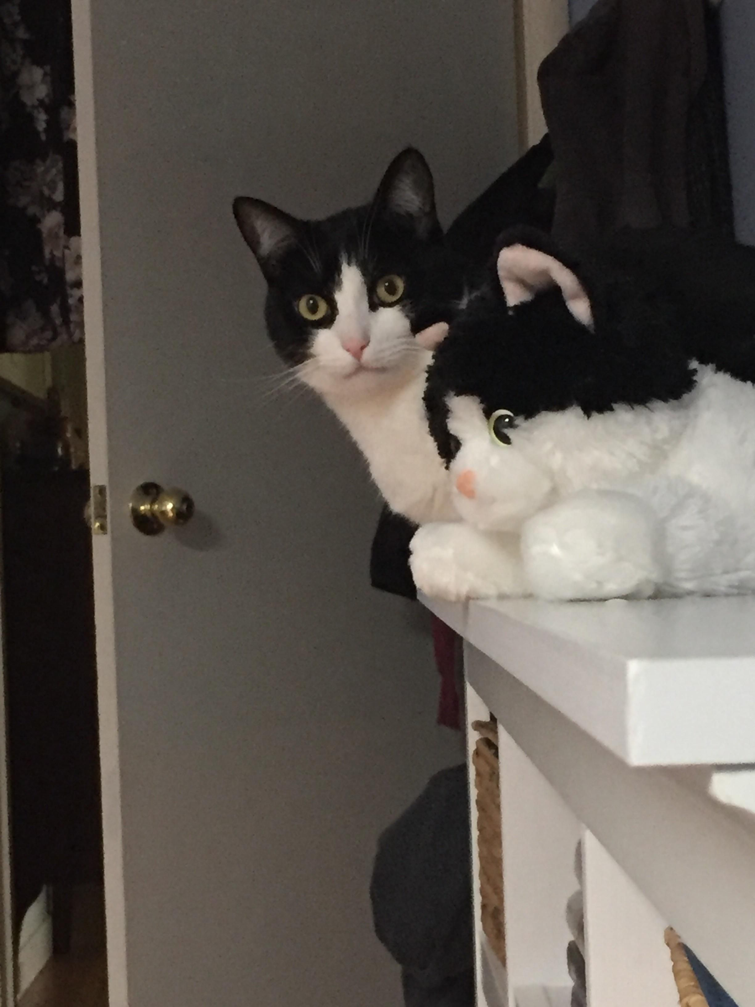 My cat twinning with his stuffed animal doppelgänger http://ift.tt/2oF5Ydu