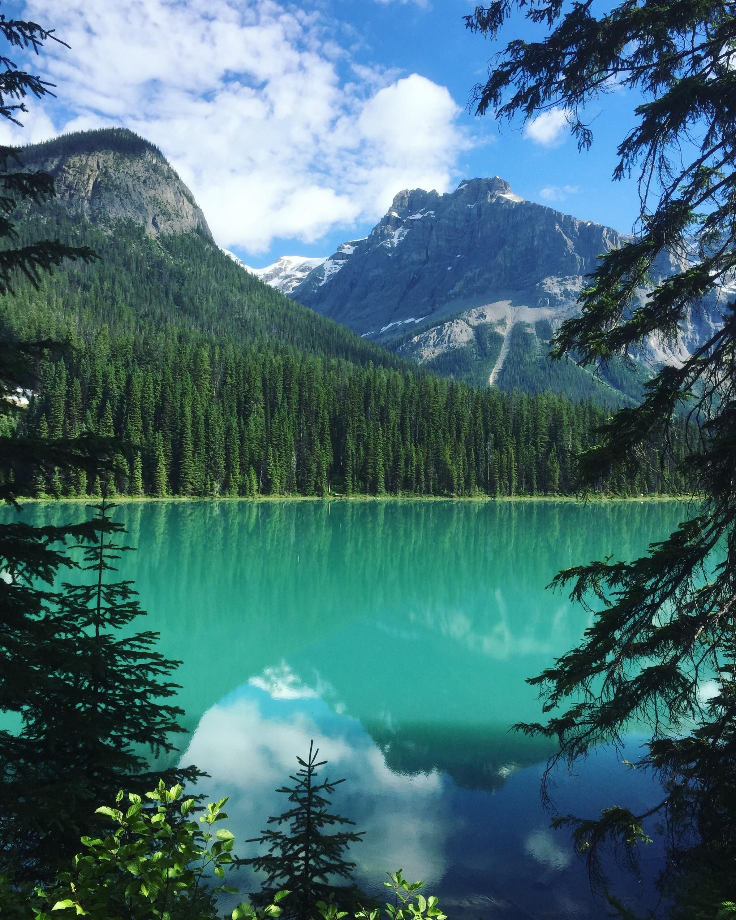 w emerald download tree nature mountains lake reflections wallpaper