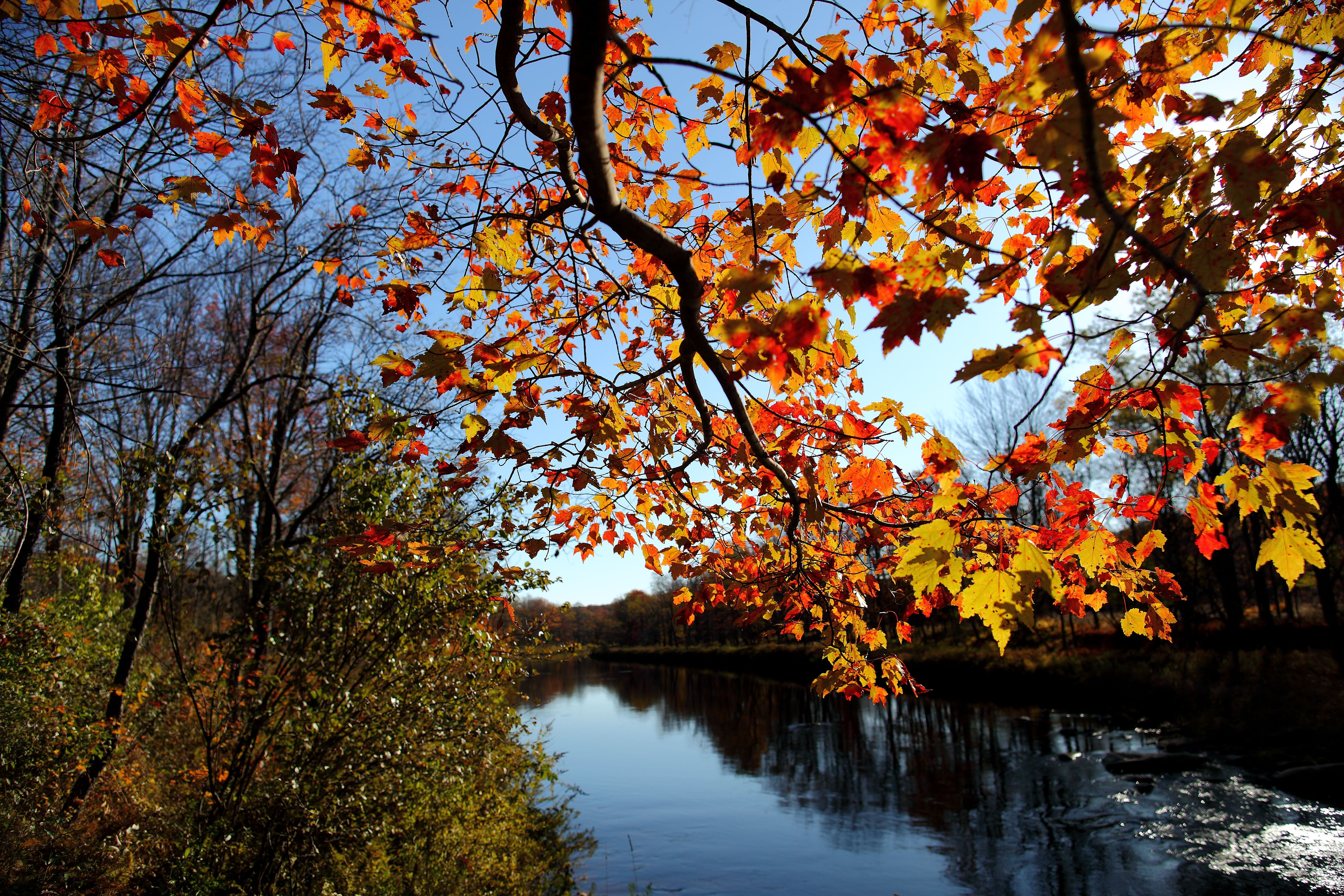 Fall Tree Branch Leaves Along River Trees Free Nature