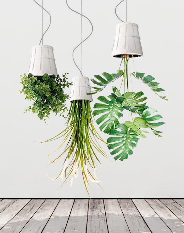 h ngende zimmerpflanzen bilder von anreizenden blumenampeln gary pinterest pflanzen. Black Bedroom Furniture Sets. Home Design Ideas
