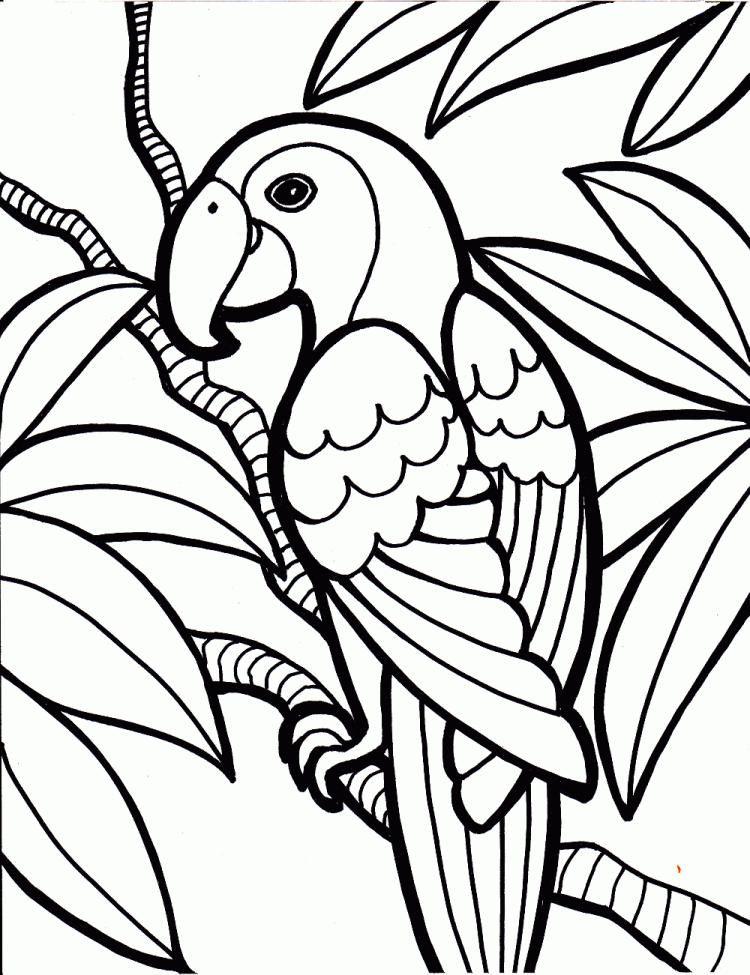 Kinder Malvorlagen Tiere Papagei Baum Coloring Malvorlagen