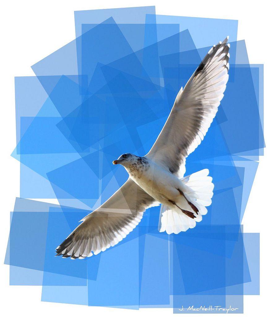 soaring   by Jen MacNeill