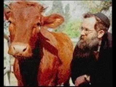 فيلم وثائقى حجر سيدنا سليمان وهيكل اليهود المزعوم Youtube Heifer Red Bible Prophecy