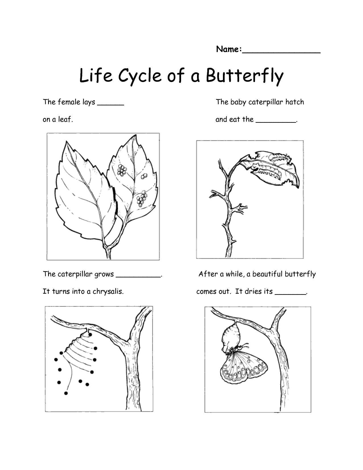 worksheet Life Cycle Of Butterfly Worksheet 78 best images about science class on pinterest life cycles interactive websites and experiments