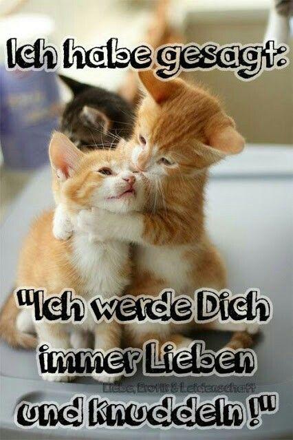 46+ Hab dich lieb bilder katzen Sammlung