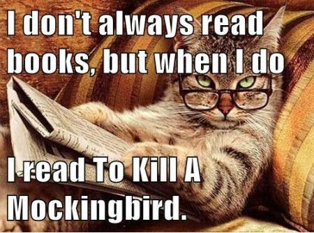 Image result for meme of cat reading to kill a mockingbird