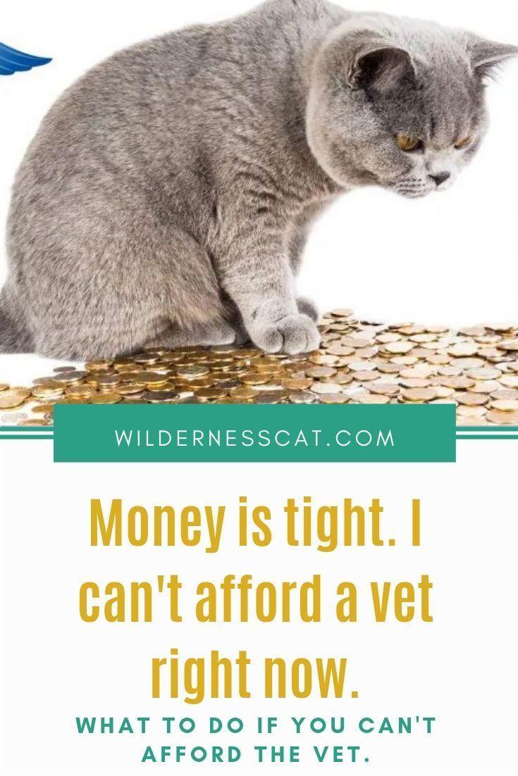 Can't Afford a Vet? What to Do if You Can't Pay Your Vet