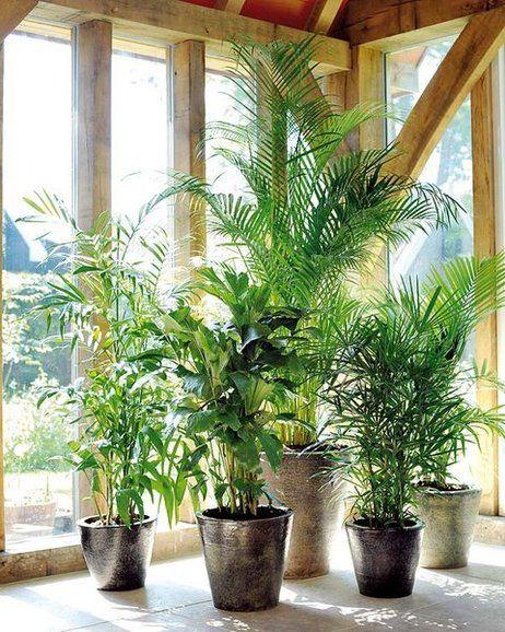 Plantas resistentes las reinas de la casa plantas for Plantas para interiores de casa