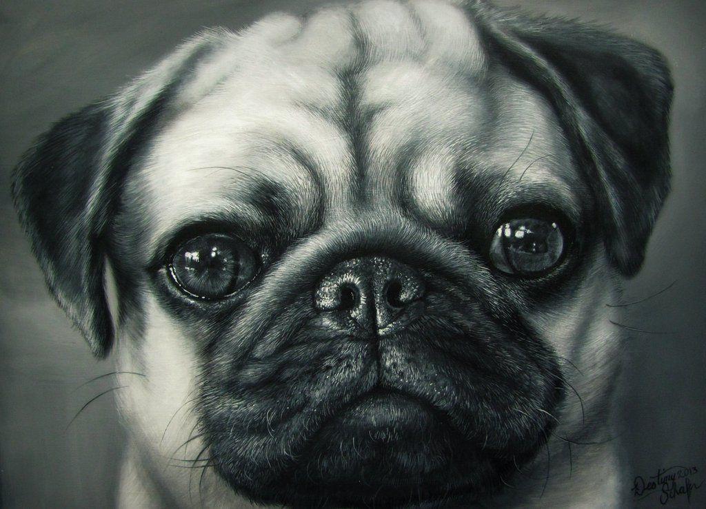Awwww Painting Of A Pug Pugs Pug Art Dogs