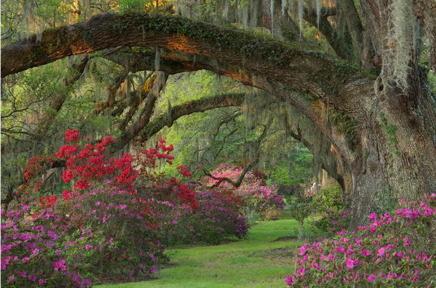 2ec9ae1798778e91efb26ff965403103 - Magnolia Plantation And Gardens Savannah Ga