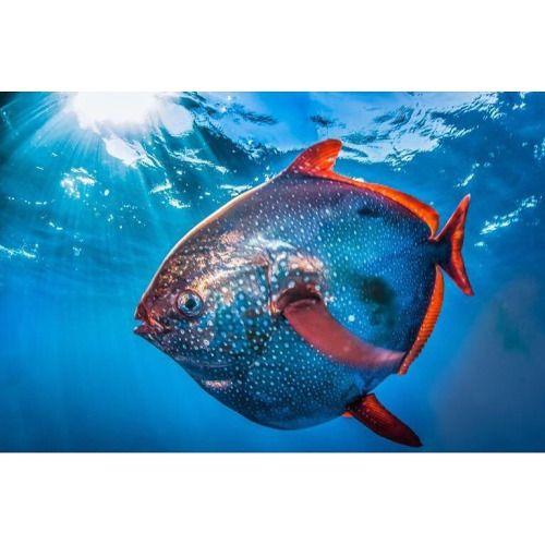 Librarian Wnm Weird Animals Sea Fish Ocean Animals