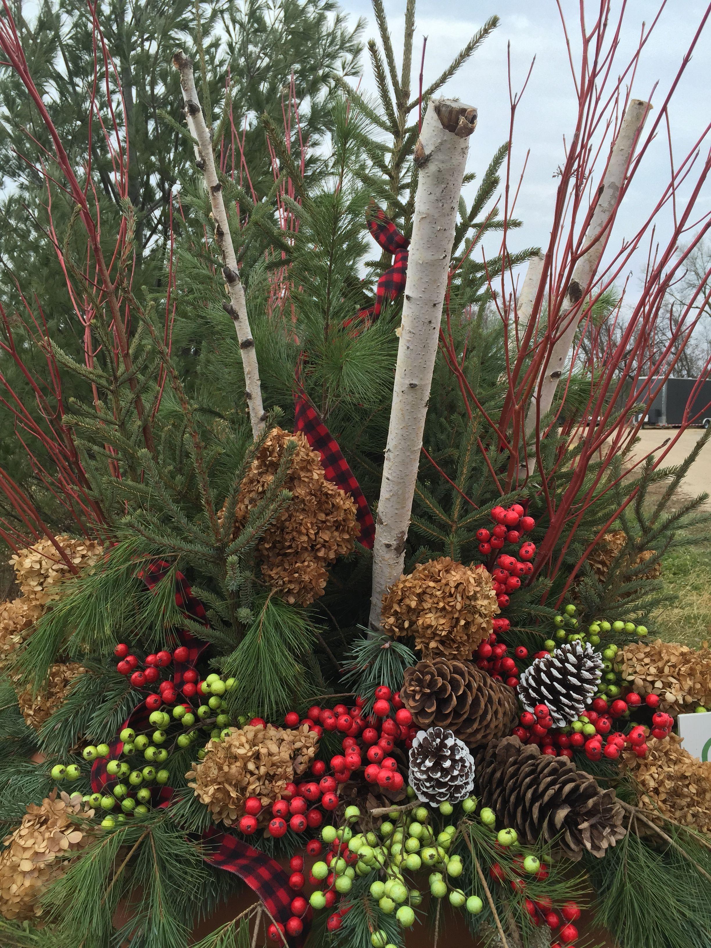 Winter Planters, Accents, Birch Poles, Garden Design, www ...