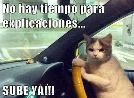 Memes De Gatos Graciosos Buscar Con Google Memes De Gatos Graciosos Gatos Graciosos Chiste De Gatos