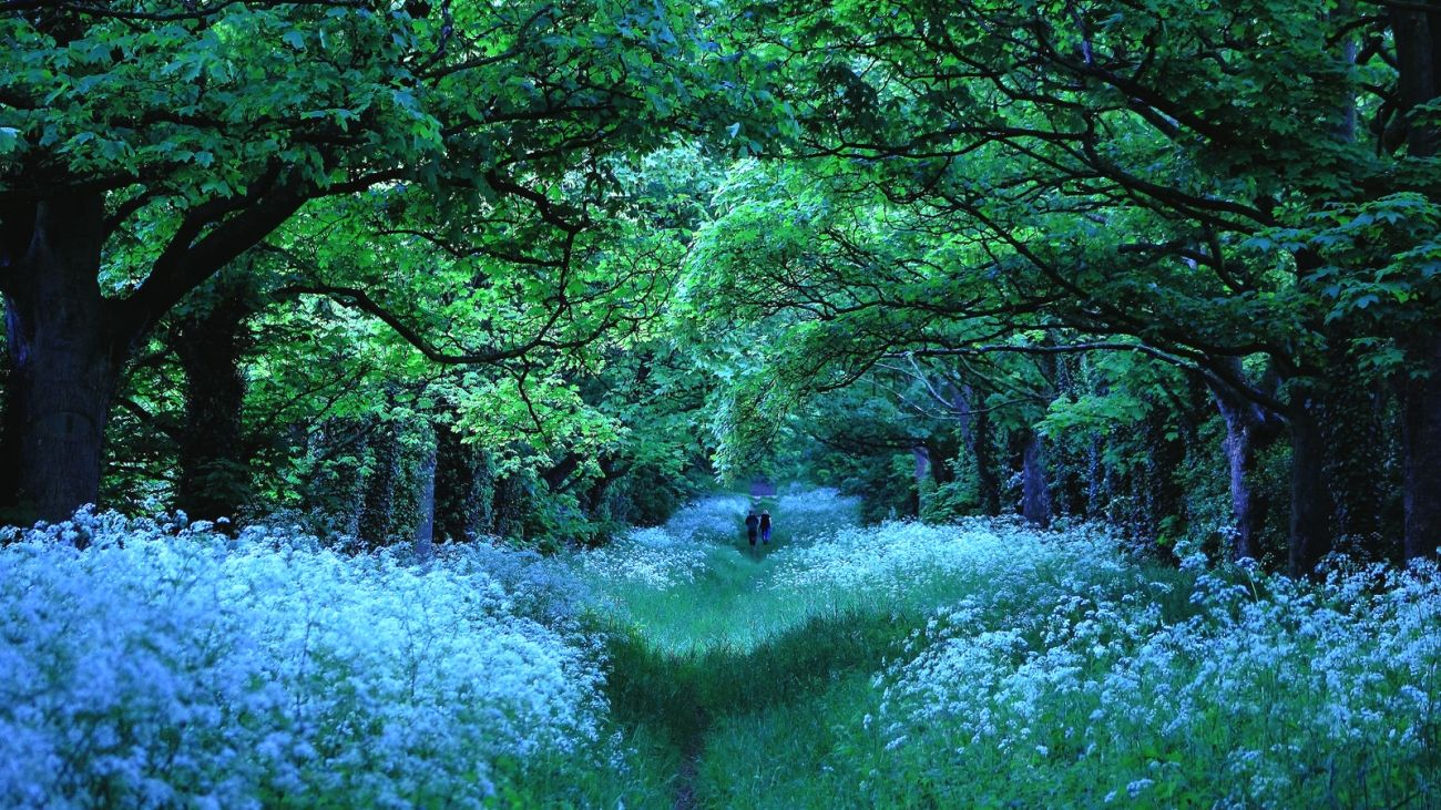 Download Nature Forest Trees Flowers Path 2k 4k Wallpaper