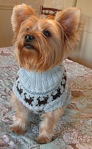 PUPPIES ON PARADE Fair Isle Dog Sweater Knitting Pattern ...
